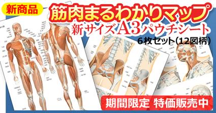 筋肉まるわかりマップ