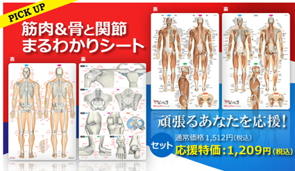 筋&骨と関節まるわかりシート 新生活応援特価